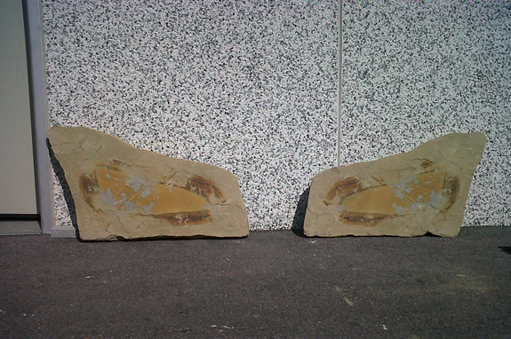 pietra langa intagliata